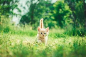 new cat, new kitten. new pet, how to take care of a kitten, things to know before getting a kitten