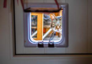 cat flap, cat flap installation, new cat flap, cat flap for my cat, pet door for cats