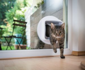 No, A Microchip Cat Flap is Not Too Small for Your Kitty! 1