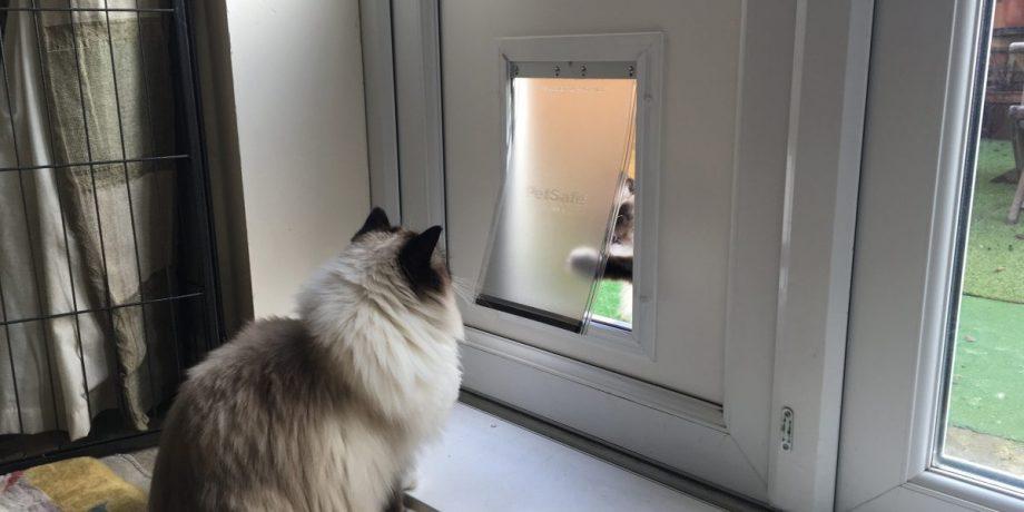 When can a kitten