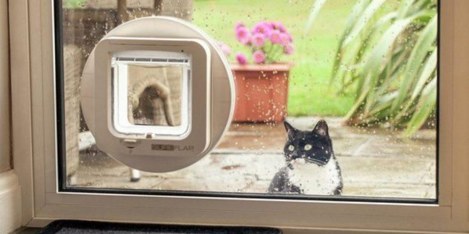cat_flap_glass_blog-okblhc8eqepod8dgdjsswniis41jg6fpj1igqu3omc