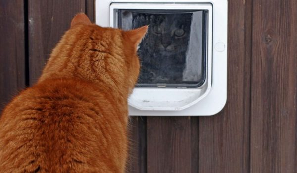 how-to-stop-other-cats-coming-through-your-cat-flap-5450a63ace589-ojgq0jmfc87ozh6uzsrxzqqcum0jhuexm3g0h9gzms