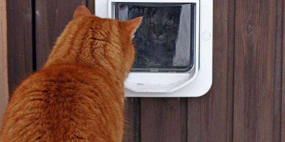 how-to-stop-other-cats-coming-through-your-cat-flap-5450a63ace589-ojgq0jmfc87ozh6uzsrxzqqcum0jhuexm3g0h9gzms